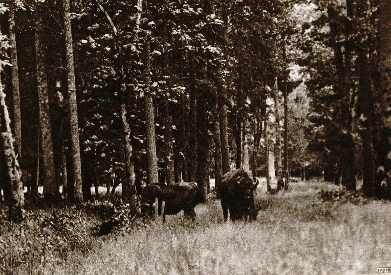 http://digital.lib.buffalo.edu/upimage/102.jpg