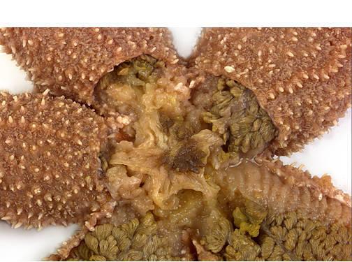 Starfish - Internal Features