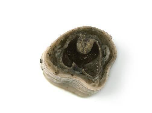 Earthworm - Cross Section