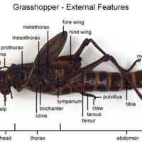 Grasshopper - External Features (with labels)