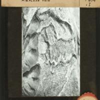 http://digital.lib.buffalo.edu/upimage/18881.jpg