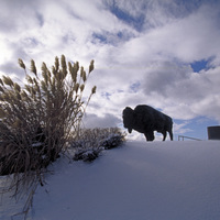 http://digital.lib.buffalo.edu/photo/photos/02004/02004068.jpg