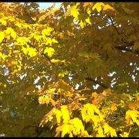 http://digital.lib.buffalo.edu/photo/photos/99081/99081059.jpg
